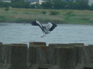 荒川河口の鳥